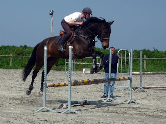 : Valorisation chevaux